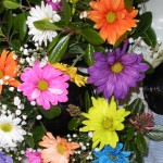 cheerful flowers